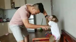 Monkey Baby Nui Nui and papa fight