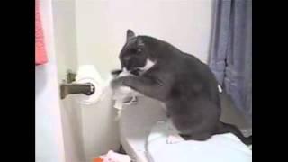 Уничтожитель туалетной бумаги