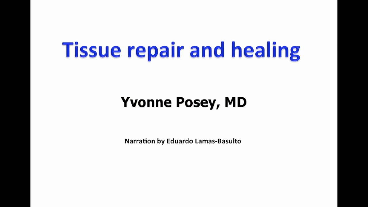 Download Tissue repair and wound healing