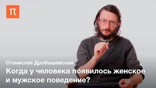 Половой диморфизм у приматов и древних людей — Станислав Дробышевский