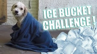 ICE BUCKET CHALLENGE - Fernanfloo con Curly