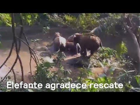 Elefante agradece rescate - Noticias con Karla Iberia