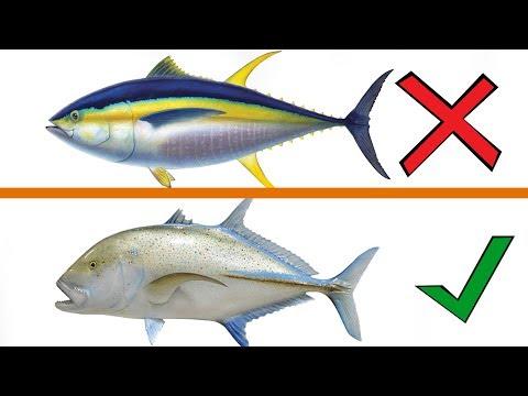 9 Jenis Ikan Yang Tidak Boleh Anda Makan!