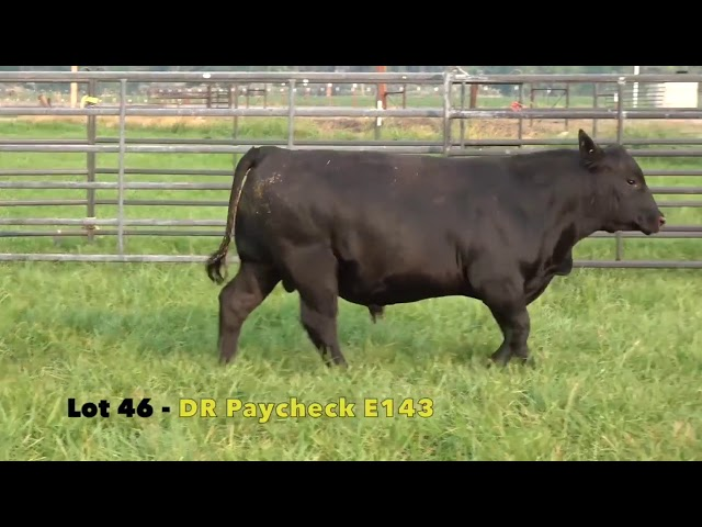 Black Gold Bull Sale Lot 46