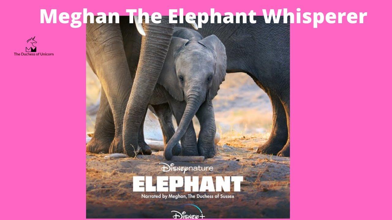 Meghan The Elephant Whisperer
