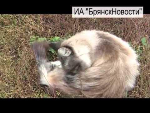 За чернобыльские права новозыбковцев общественники и депутаты попробуют бороться сообща