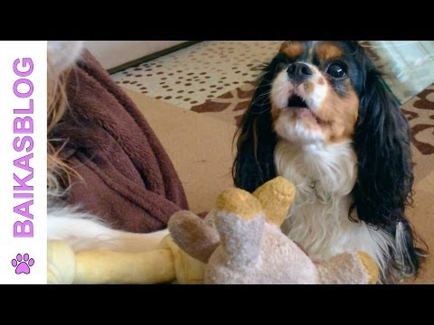 Bloopers : Milo the talking dog - Le chien qui parle