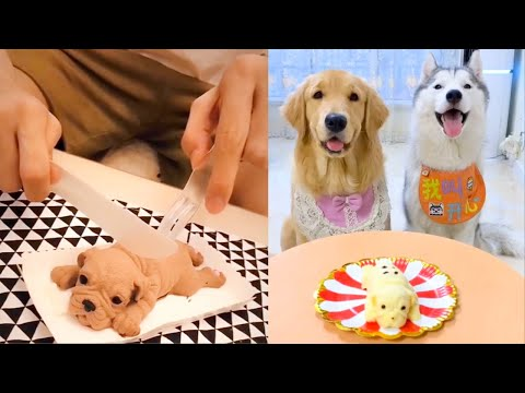 Cat and Dog Reaction to Cake – Funny Cat & Dog Cake Reaction Compilation
