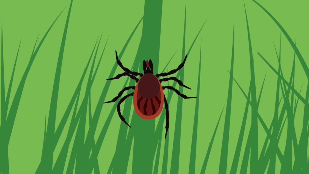 Lyme Disease - Ottawa Public Health