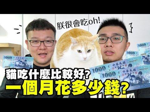 【貓吃什麼比較好?一個月花多少錢?】志銘與狸貓閒聊
