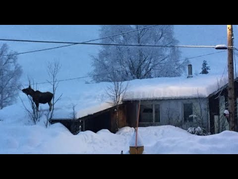 What it's like to Live in Alaska Fairbanks Alaska