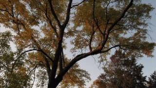 Music: The Park - Uriah Heep Indian-Summer/Fall-Images from the Bot...