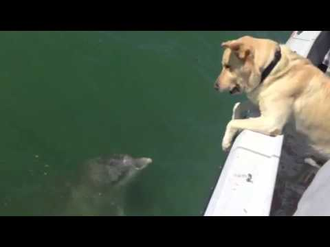 Dog talking to dolphin