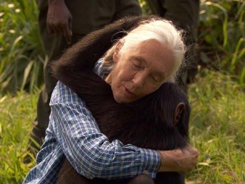 La Grande Cause des Primates : Les GORILLES  Hqdefault