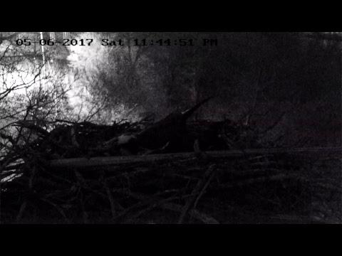 CLC Osprey Cam