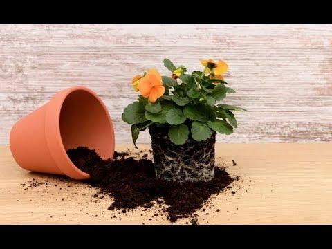 Общие правила ПЕРЕСАДКИ комнатных растений | Пересадка и перевалка
