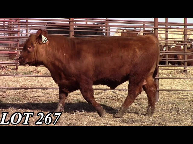 Mead Angus Farms Lot 267