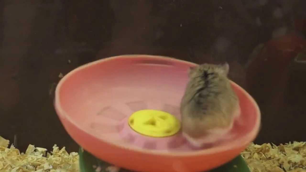 太空飛鼠離心力訓練 - YouTube