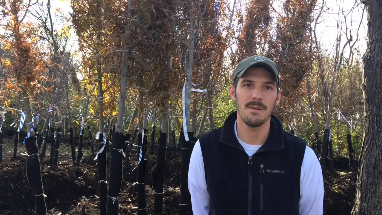 planting storm-resistant trees in knoxville - youtube