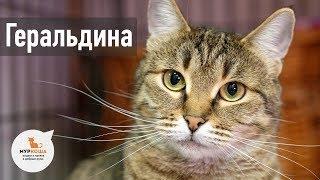 """Кошка Геральдина (уже дома) - приют """"Муркоша"""""""