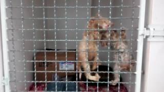 Котята в вет. клинике