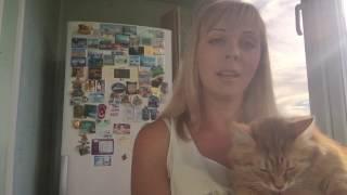 Дешево VS дорого поймет ли кот?