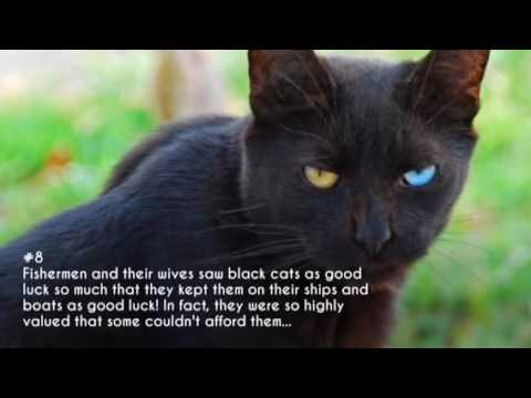 15 Interesting Cultural Facts About Black Cats!
