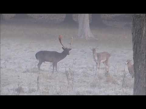 Daňci a mufloni - Hunter of vivid beauty - Lovcem živé krásy