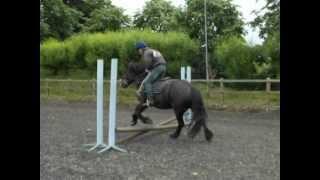 Equine Unity - Saxon Napping Training