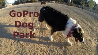 Gopro Dog - Ray's Dog Park Adventure Through A Dog's Eyes (hero 3+ Black Edition Music Video)