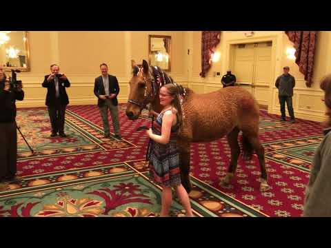 Erie County Girl Receives Horse As Make-A-Wish Gift