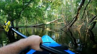 Alligator Charging Kayak 7 12 20