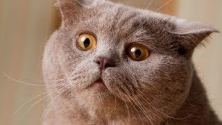 ШОК! Смешные коты и кошки. Приколы 2015.
