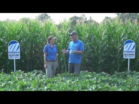 Maizex Moving: Laura Johnston with an Agronomy Plot Update