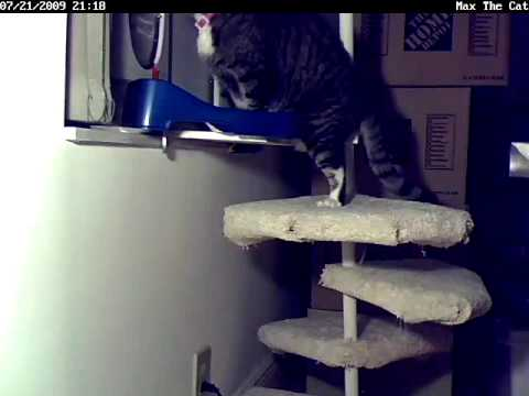 Max The Cat Learning How To Climb The Spiral Stair Youtube