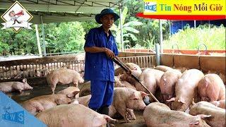 Giá lợn hơi hôm nay ngày 15/10 | Tin Nóng Mỗi Giờ