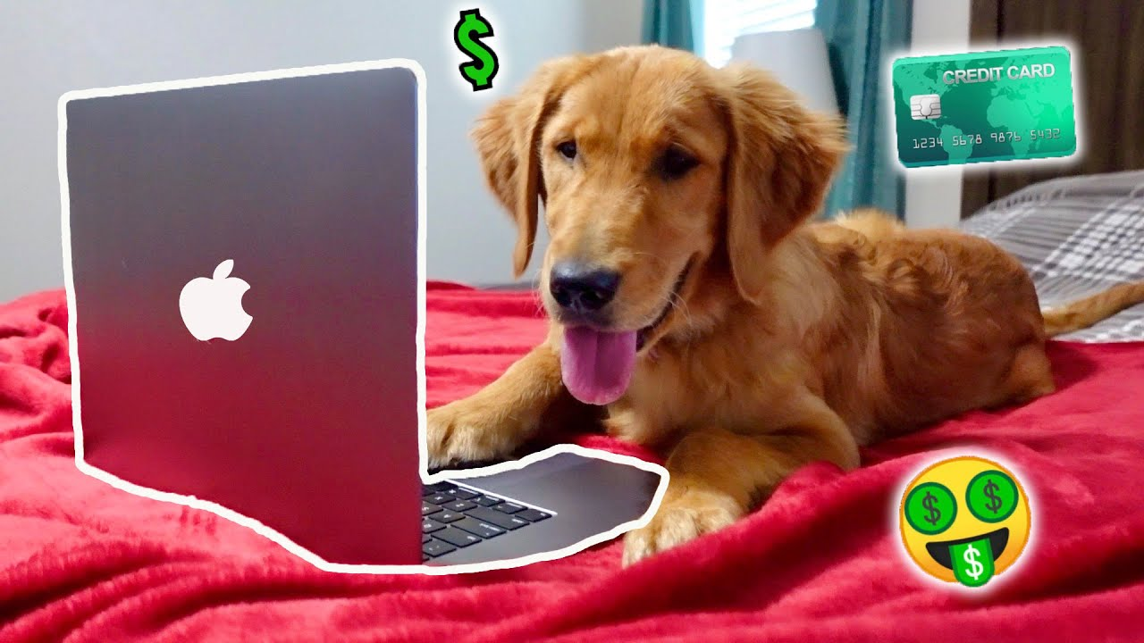 My Puppy Stole My Credit Card