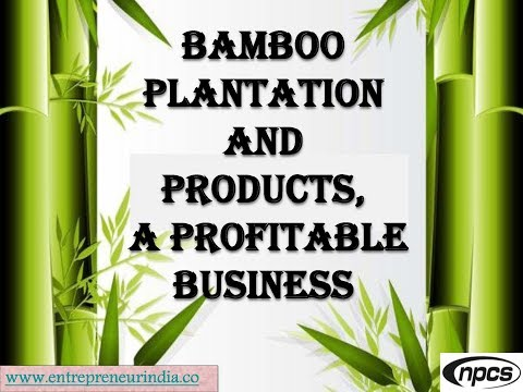 Bamboo Plantation and Products, a Profitable Business