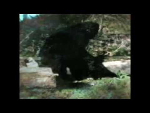 Legendák Nyomában   Yeti & Nagyláb Bigfoot) letöltés