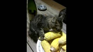 Питание  котят