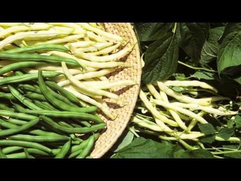 Webinar: Saving Seeds from Legumes
