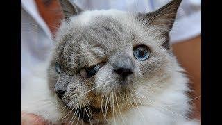 10 Zmutowanych Kotów Gwiazd Internetu
