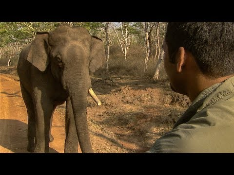 Tense Stand Off with a Giant Indian Elephant | BBC Earth