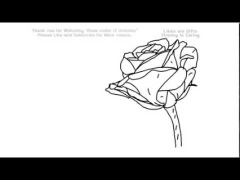 how to draw a rose youtube.com watch v _wrkkhwjub4