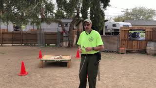 Small dogs training 2 dogs at once  Las Vegas Dog Training