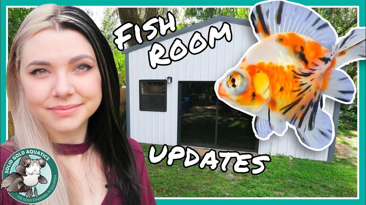 fish-room-updates-vlogmas-day-2