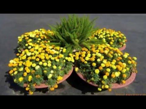 Оформление рабаток фото, цветы для рабаток Любимые цветы