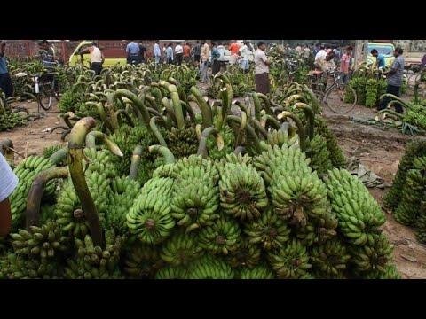 Daranggiri: Asia's biggest banana market