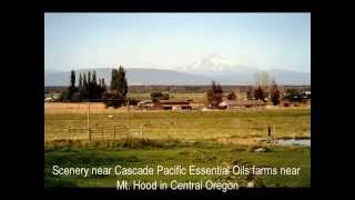 Scenery near Cascade Pacific Essential Oils farms in Central Oregon