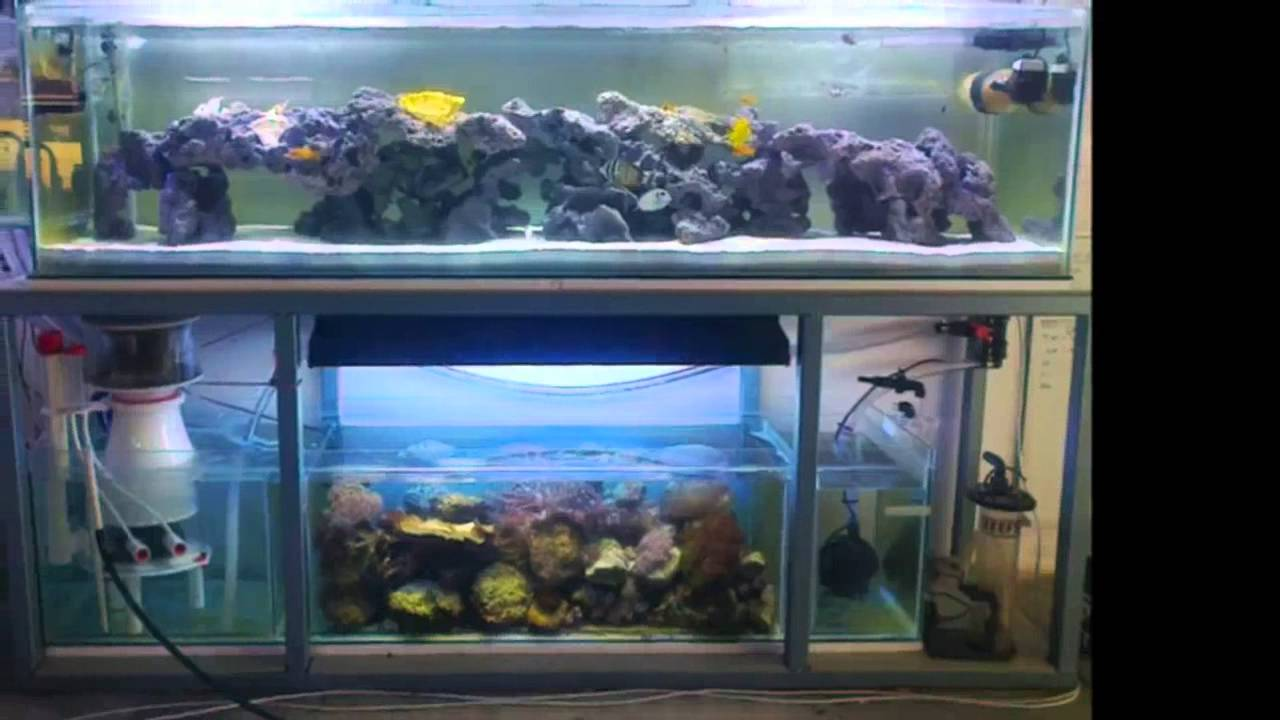 Freshwater aquarium fish in south africa - Artificial Reef From Reefrock South Africa